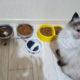 Кошка ничего не ест