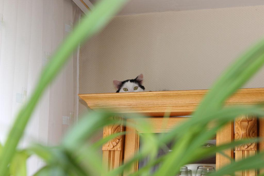 Кот на серванте