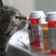 Как давать кошке таблетку