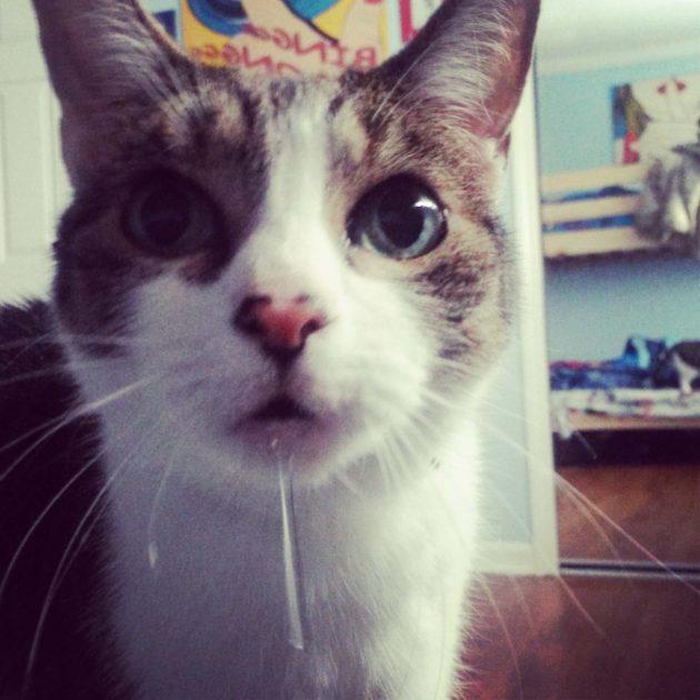 У кота сильно текут слюни