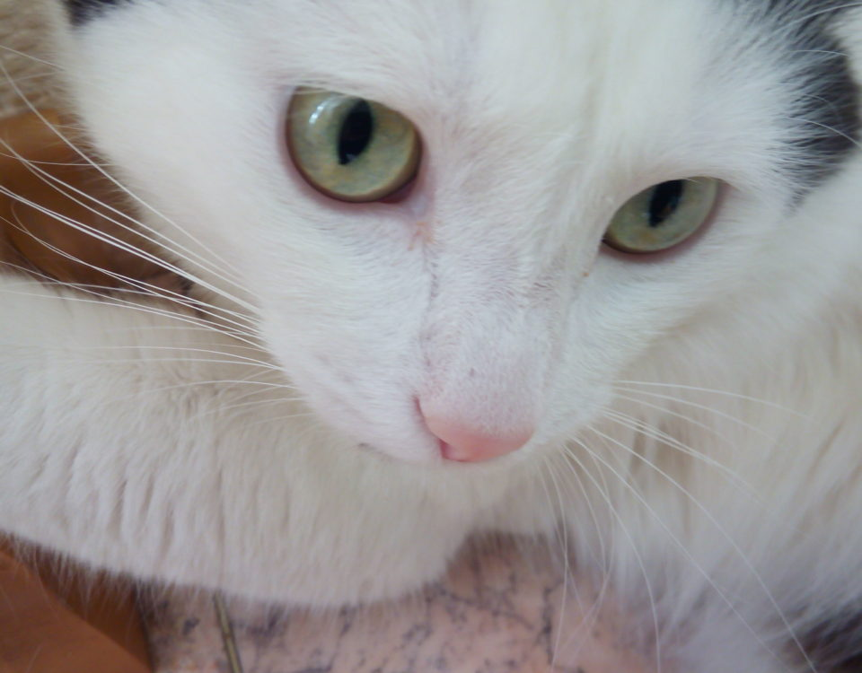Корочки гноя у глаз кошки