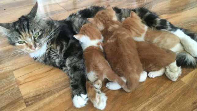 Сколько месяцев беременность у кошки