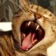 Рвота у кота