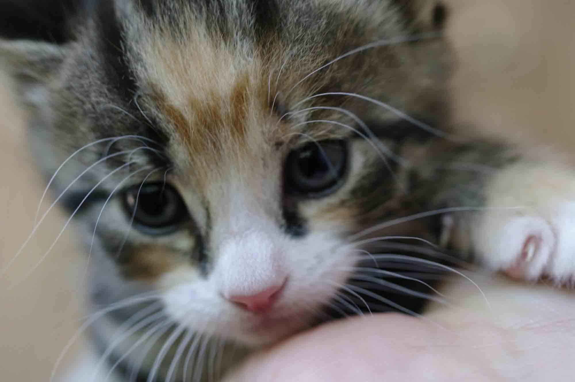 Как быстро приучить взрослого кота к лотку с решеткой и наполнителем