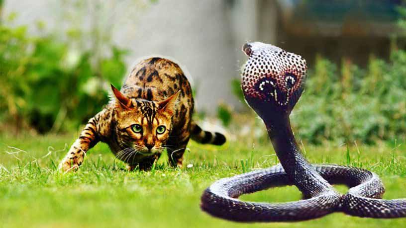 Кот против змеи