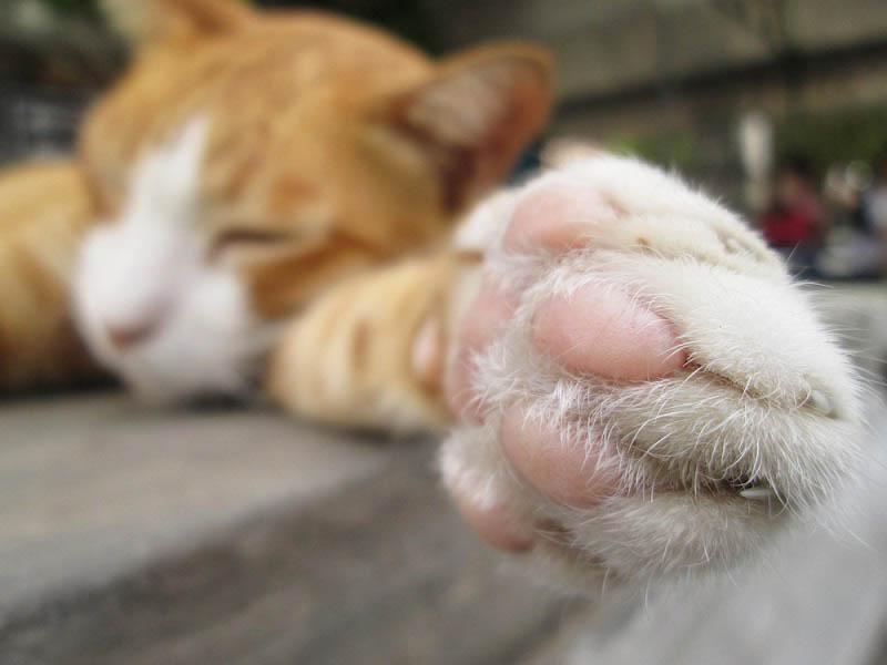 Зачем кошки мнут лапами
