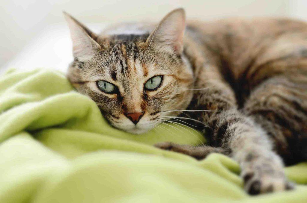 Стерилизация кошки: подготовка и уход