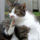 власоеды у кошки