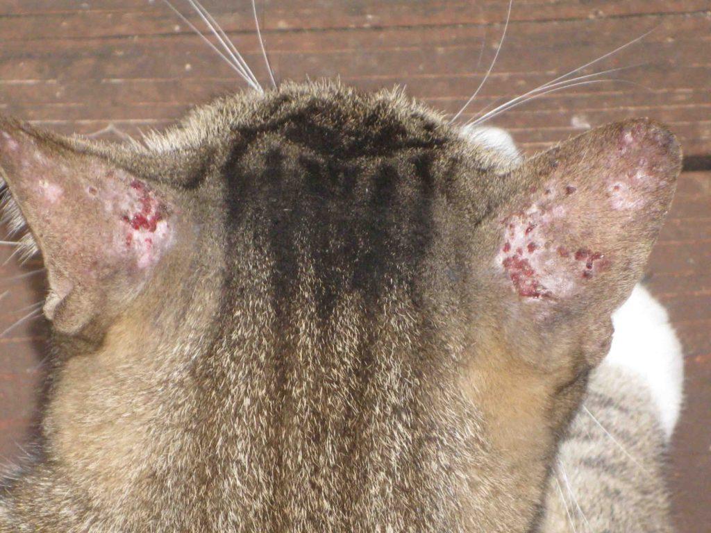 аллергия на укусы от блох