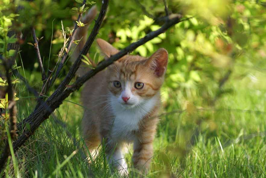 котенок в лесу
