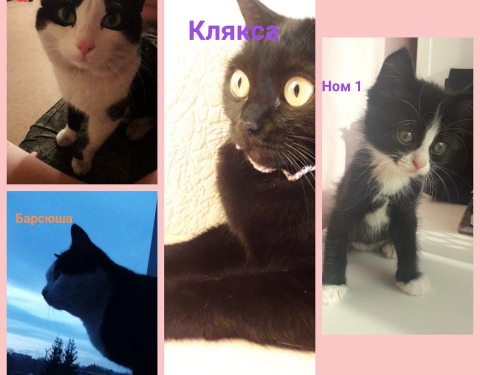 кошачье семейство