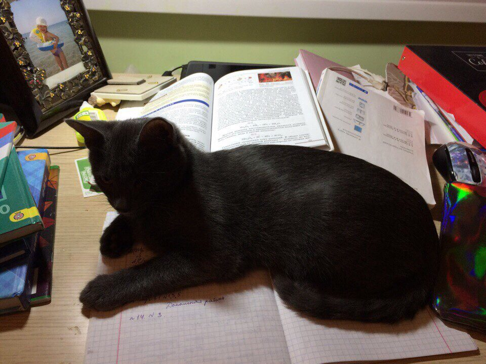одноглазый котенок