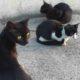 голодные кошки