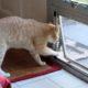 как приучить кошку к новому дому