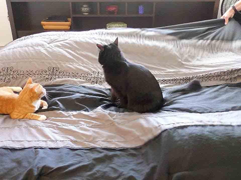 кошка гадит на кровать