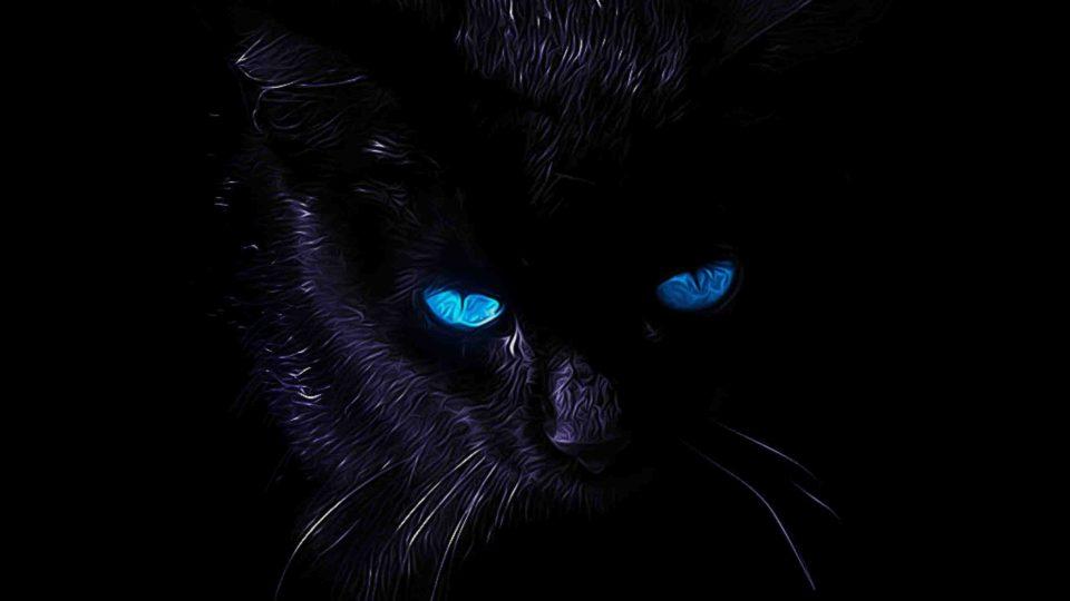 Помесу кошкам нельзя смотреть в глаза
