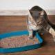 что делать если у кошки понос