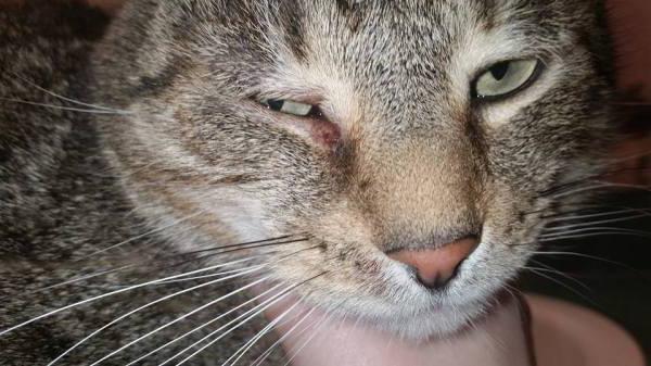 чем промыть кошке глаза