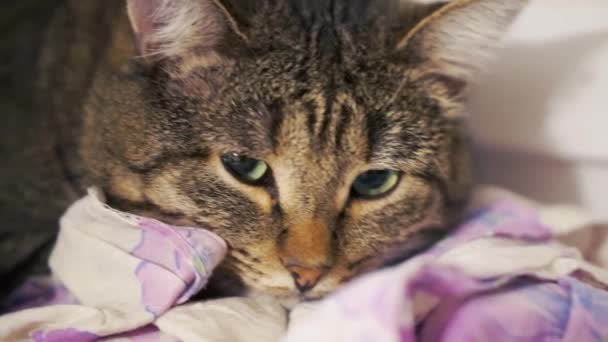 как узнать что кошка заболела