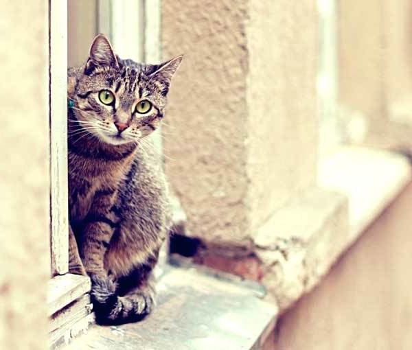 соседский кот