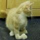 перелом у кошки