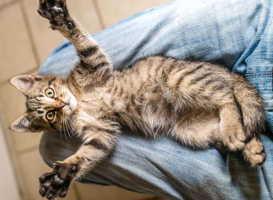 Как понять что кошка любит хозяина