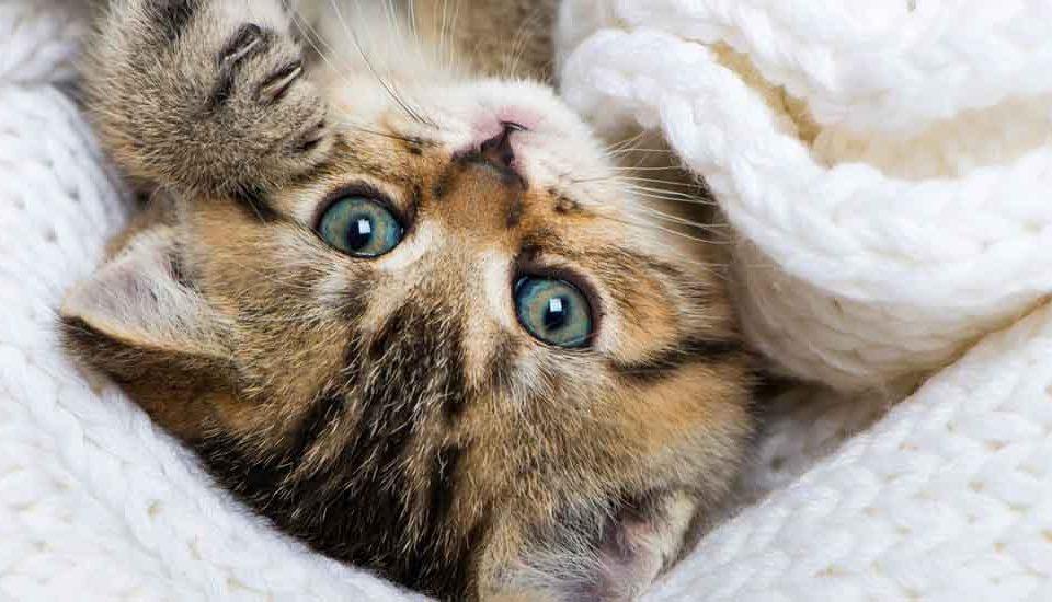 котенок с врожденным заболеванием