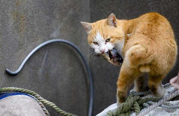 рассказ про кота рыболова