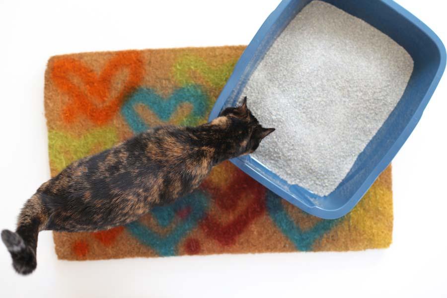 У кота частые позывы к мочеиспусканию