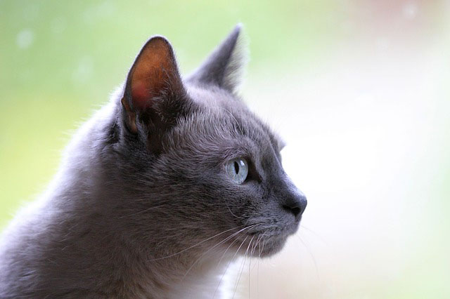 Болячки на губах у кота