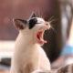 Есть ли у котов молочные зубы
