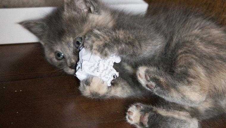 Игрушки из бумаги для кошки