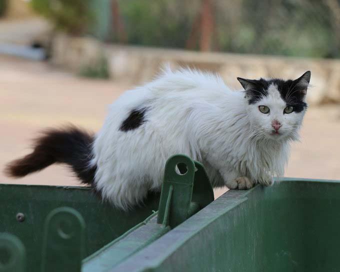 котенка выбросили в мусорку
