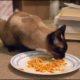 Какой выбрать корм для кошки