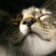 Почему кошка при дыхании сопит и хрюкает