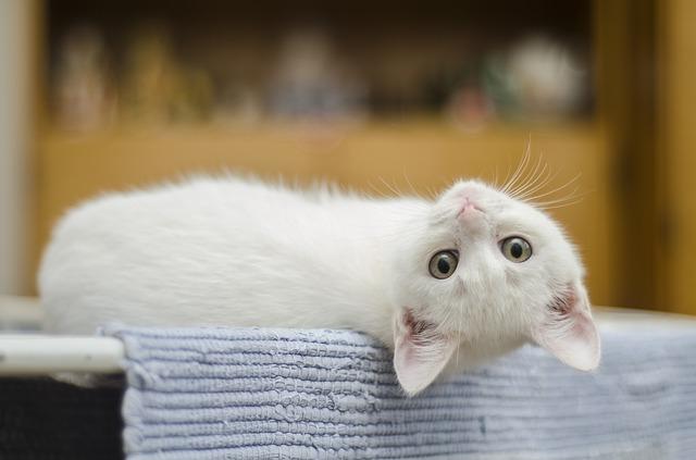 как воспитать котенка