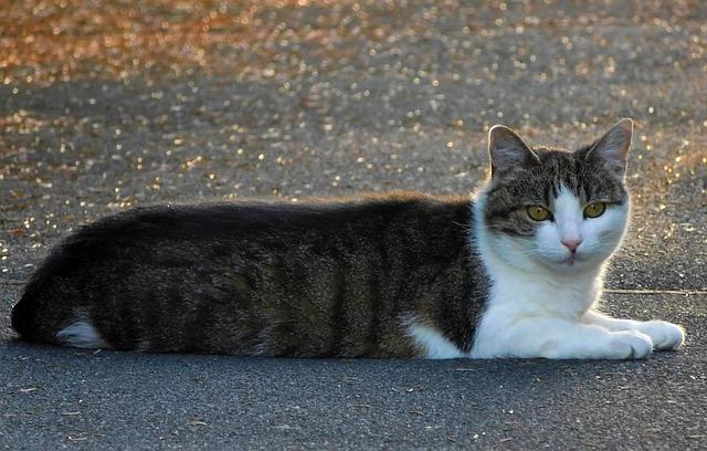 как поймать кота на улице если он боится
