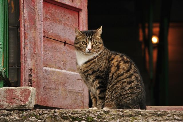 Кошка гуляет как успокоить в домашних условиях