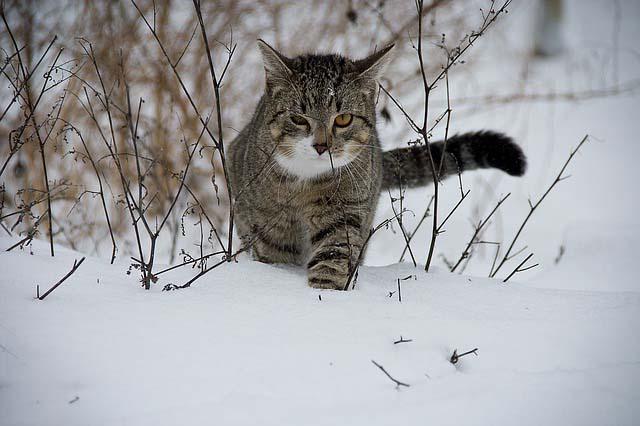 кот нашел своих уехавших хозяев