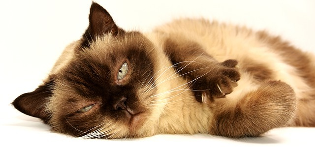 Простуда у кота