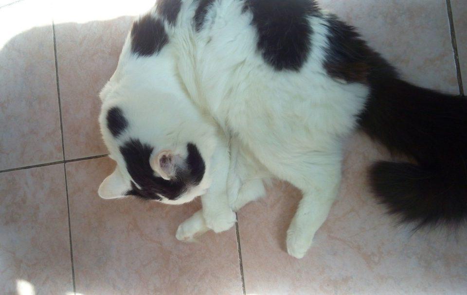 Причины и лечение панкреатита у котов. Какие симптомы характерны, первая помощь животному в домашних условиях
