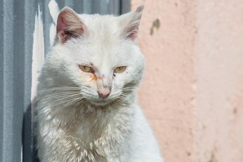 У кота коричневые выделения из глаз