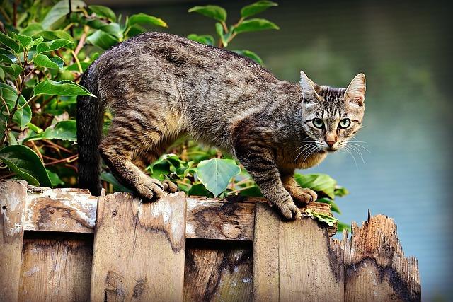Кошка сколько гуляет дней