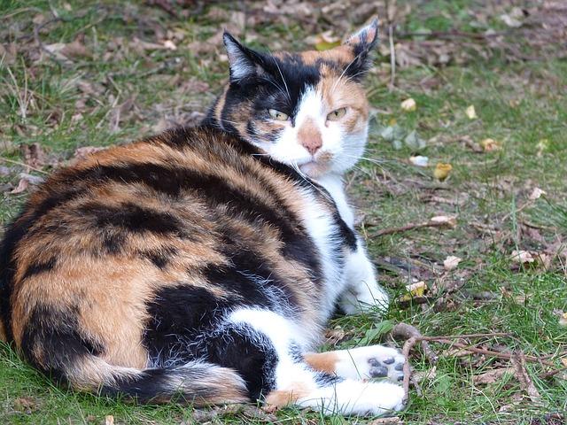 Сколько месяцев кошка вынашивает котят