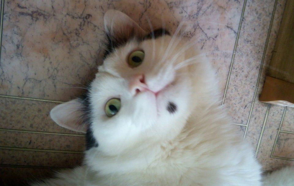 Сколько в среднем живут коты