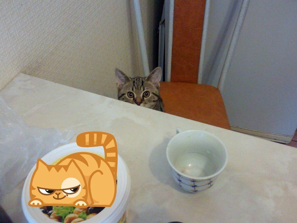 Как отучить кота лазить по столам