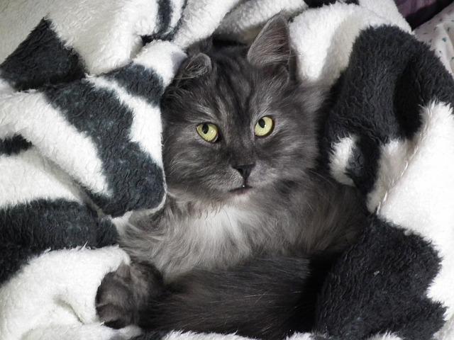 Как назвать серого кота