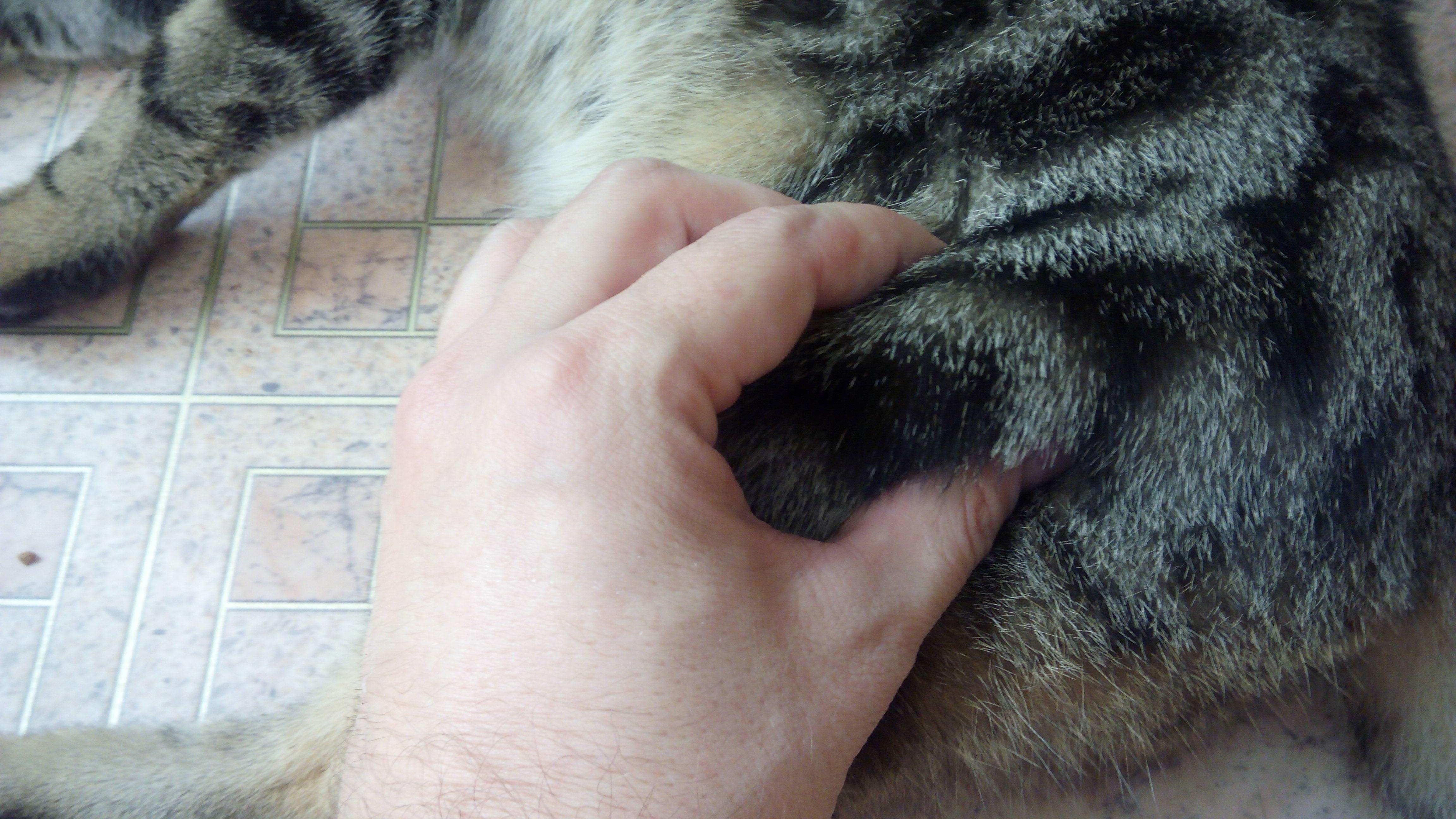 Как сделать коту укол внутримышечно