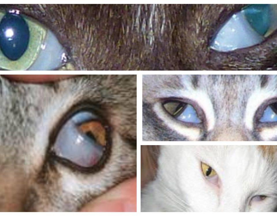 У кота глаза наполовину закрыты пленкой
