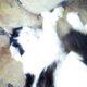 Глюкоза у кота повышена
